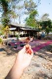 Супер деревянное семя с моментом волшебства мира Стоковое Изображение
