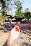 Супер деревянное семя с моментом волшебства мира Стоковые Фотографии RF