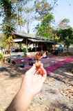 Супер деревянное семя с моментом волшебства мира Стоковые Изображения RF
