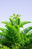 Супер нерукотворный пик сосны вдоль супер хорошего дня Стоковая Фотография RF
