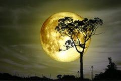 супер польностью желтое дерево силуэта задней части луны и красочное небо стоковое изображение rf
