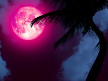 супер розовая кокосовая пальма силуэта задней части луны в саде Стоковые Фото