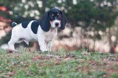 Супер собака Стоковые Изображения