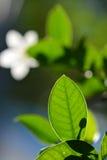 Супер съемка макроса зеленых листьев Стоковые Фотографии RF