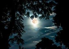 Супер луна обрамленная ветвями дерева Стоковая Фотография RF