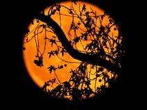 Супер луна Стоковое Изображение RF