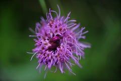 Супер фото макроса цветка Стоковые Изображения