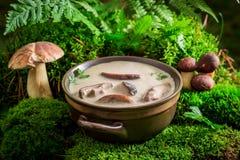 Суп гриба на зеленом мхе в лесе Стоковое Фото