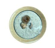 Суп каштана Стоковое Изображение RF