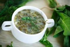 Суп щавеля Стоковые Фото