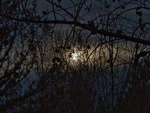 Суровые деревья в феврале и холодное Солнце стоковое фото rf
