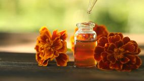 Суть цветков на таблице в красивом стеклянном опарнике сток-видео