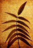 сухая бумага листьев Стоковые Изображения