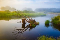 Сухая ветвь дерева в реке на рассвете лета стоковая фотография