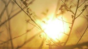 Сухая ветвь дерева на белой природе предпосылки ветвь дерева на образе жизни солнца конца-вверх ландшафта природы захода солнца сток-видео