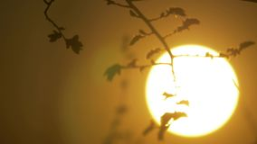 Сухая ветвь дерева на белой природе предпосылки ветвь дерева на солнце конца-вверх образа жизни ландшафта природы захода солнца сток-видео