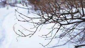 Сухая ветвь дерева на белом снеге природы предпосылки падает тяжело ландшафт акции видеоматериалы