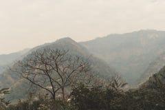 Сухая ветвь дерева на тумане Стоковое Изображение