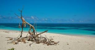Сухая ветвь на береге Стоковые Изображения RF