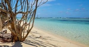 Сухая ветвь на береге Стоковые Фото