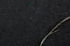 Сухая ветвь на влажном камне стоковые изображения rf