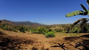 Сухая долина с горами и ладонью стоковое изображение rf