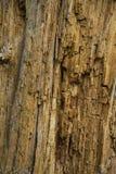 сухая древесина в лесе осени Стоковые Фотографии RF