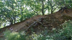Сухая древесина в форме изверга Стоковое Изображение RF