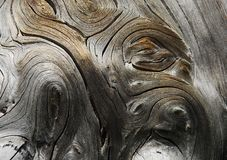 сухая древесина стоковые изображения