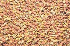 Сухая еда для собаки, кота стоковое изображение rf