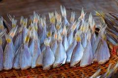 Сухая еда, Солнц-высушенная рыба, свежие продукты в рынке ` s Таиланда Стоковое Изображение