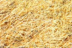 Сухая желтая текстура предпосылки травы соломы Стоковое Изображение