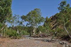 Сухая засуха Австралии захолустья русла реки Стоковое Изображение