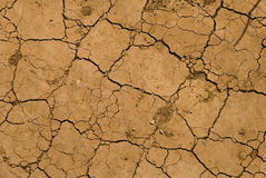 сухая земная текстура Стоковые Изображения RF