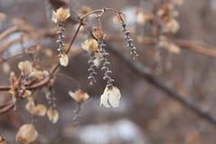 сухая зима цветков Зима Снег упал вне сух Стоковые Изображения
