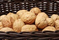 Сухая изолированная студия плодоовощ грецкого ореха Стоковое Изображение