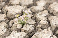 Сухая и треснутая почва Стоковая Фотография RF
