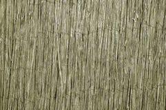 Сухая камышовая загородка Оно соединено проводом металла Тростники предпосылки текстур стоковая фотография rf