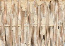 Сухая камышовая стена Стоковые Фото