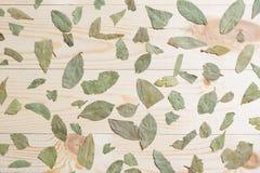 Сухая картина лист залива на деревянном столе Стоковая Фотография