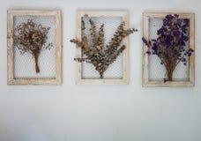 Сухая картинная рамка цветка Стоковые Изображения RF