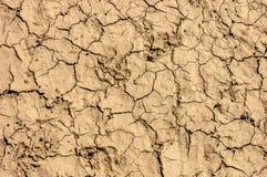 Сухая коричневая треснутая текстура земли Стоковые Изображения RF