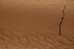 Сухая обезвоженная земля Стоковое фото RF