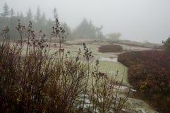 Сухая осень цветет в падениях дождя в glade леса Ненастный туманный пасмурный день осени стоковые изображения rf
