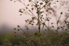 Сухая одичалая трава Стоковое фото RF