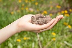 Сухая почва в руке Стоковые Изображения RF