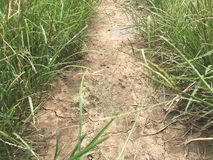 сухая почва и зеленая трава Стоковые Фото