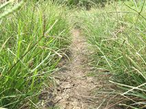 сухая почва и зеленая трава Стоковое Изображение