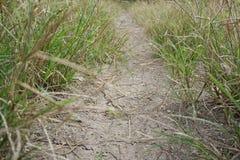 сухая почва и зеленая трава Стоковое фото RF
