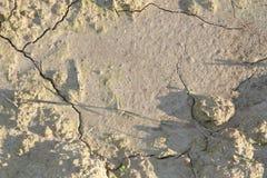 Сухая почва после дождя Стоковые Фотографии RF